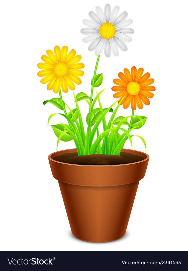 Flowers In A Pot Royalty Free Vector Image Vectorstock