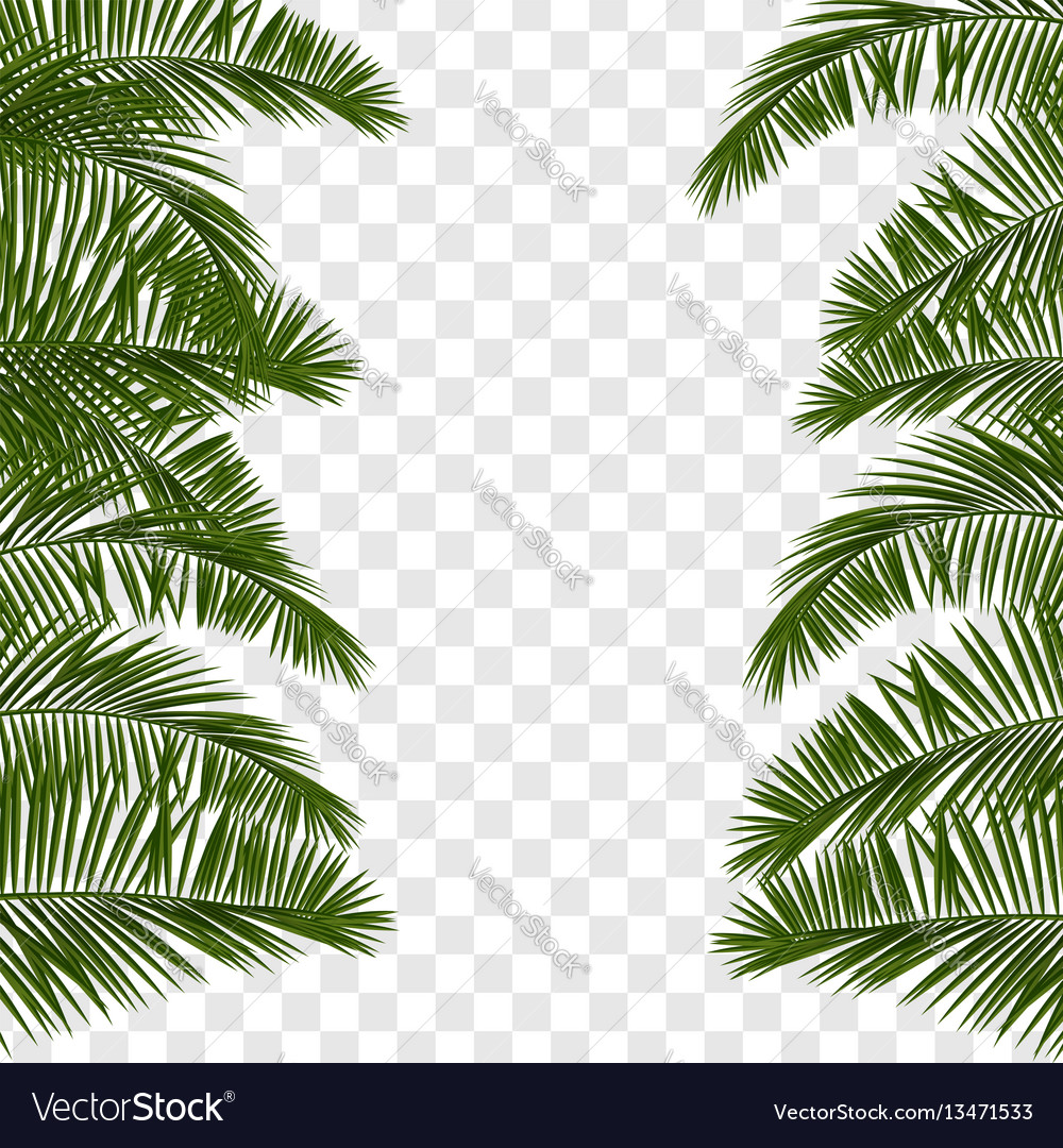 Summer green palm leaf transparent Royalty Free Vector Image