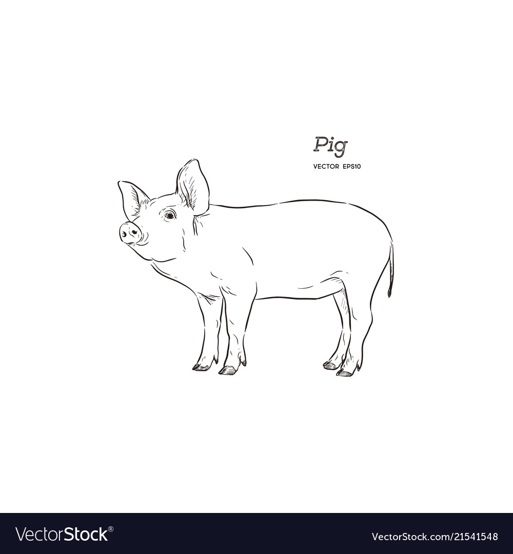 Pig in graphic style hand drawing vector image