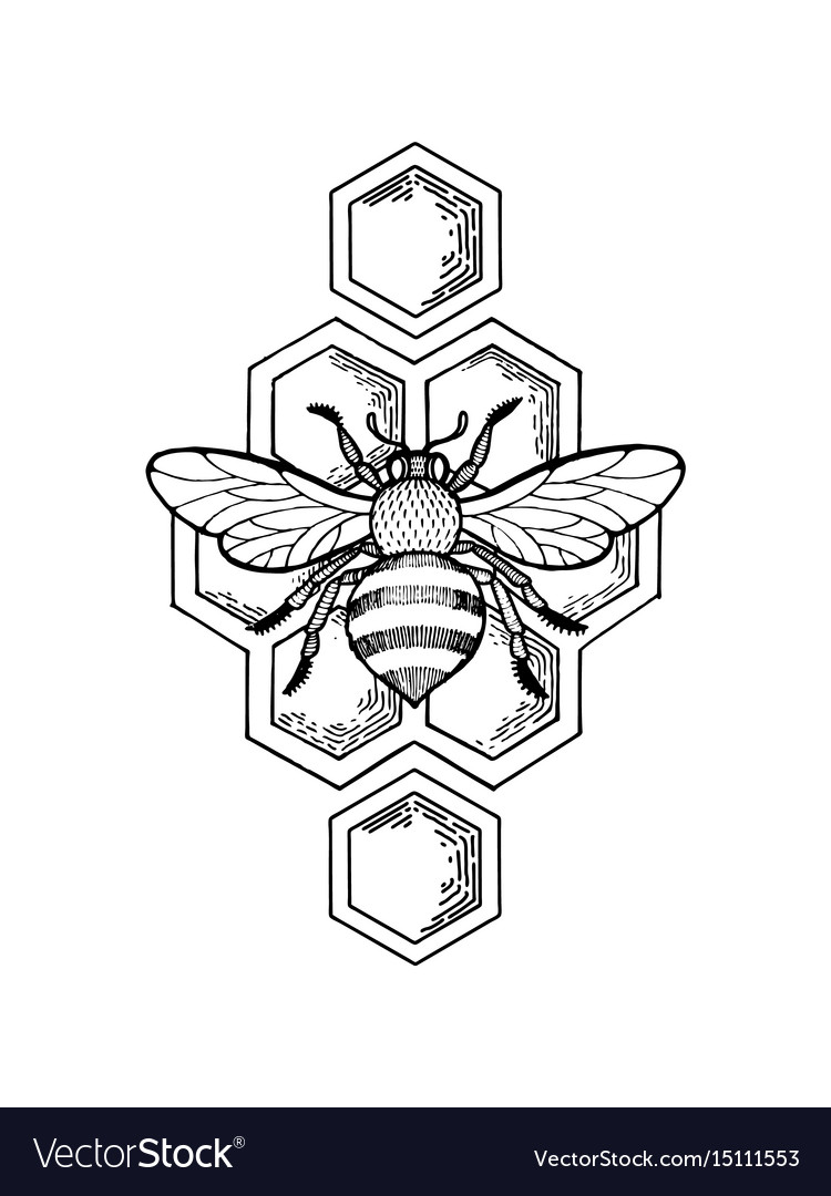 Bee and honeycombs engraving style