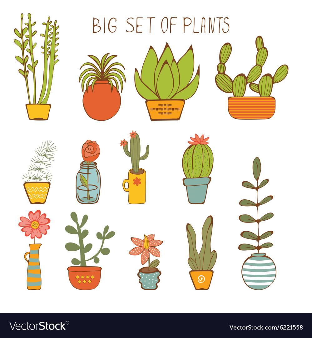 Beautiful set of hand drawn houseplants