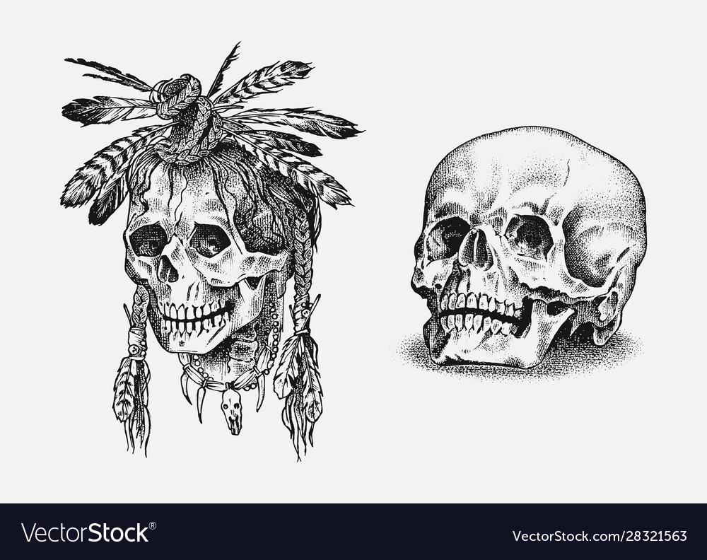 Human skull dead native american indian
