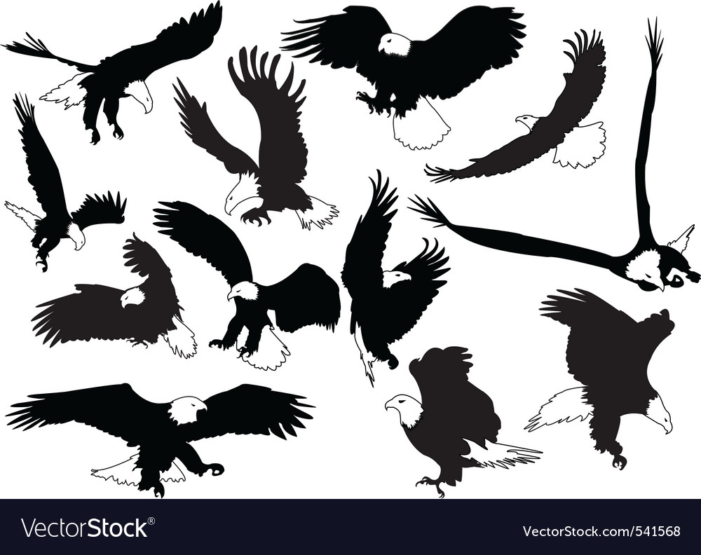 Eagles in silhouettes