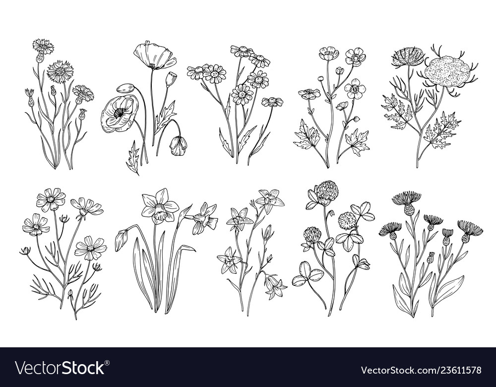 Wild flowers sketch wildflowers and herbs nature