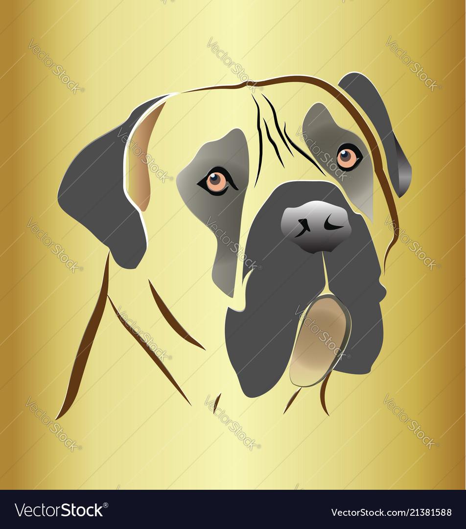 Mastiff dog head on gold background