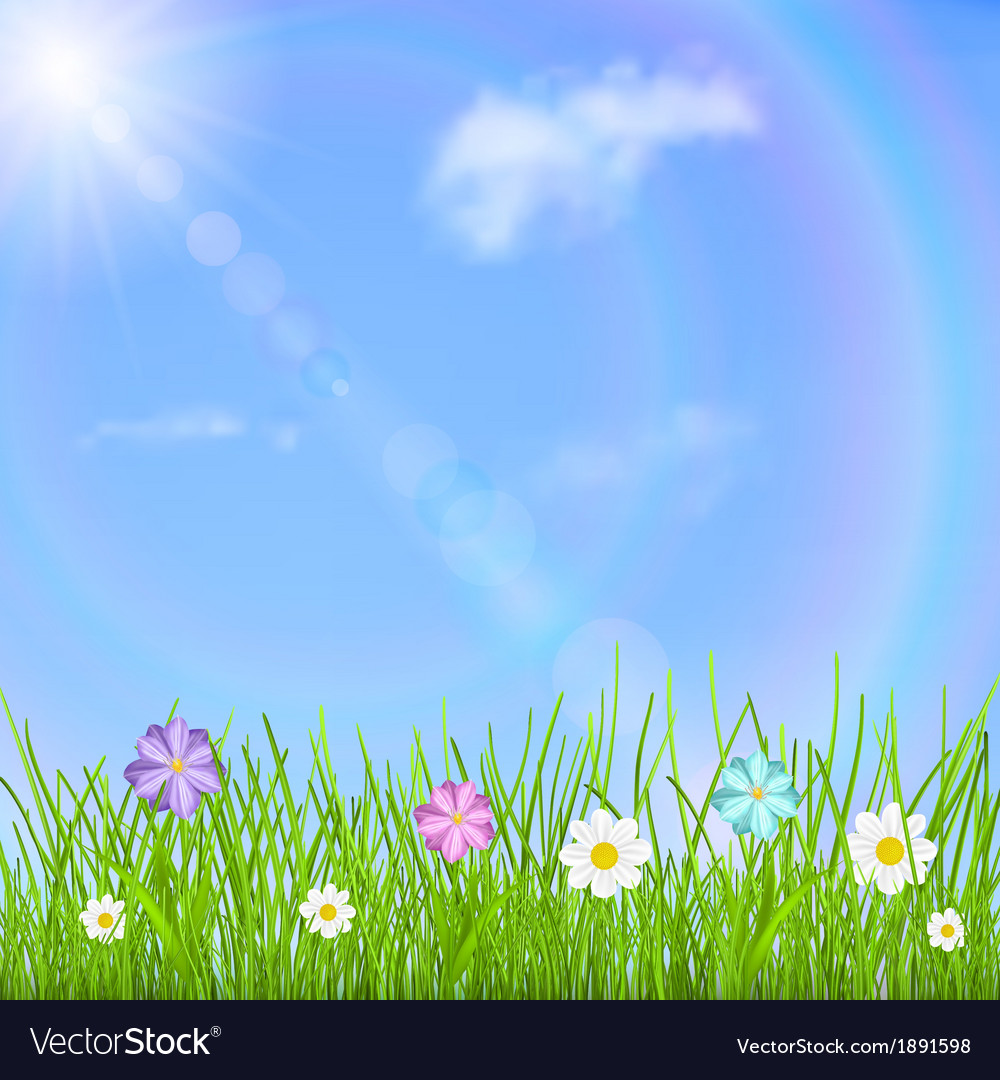 Grass and flowers background Flower Drawing Vectorstock Background With Sky Sun Grass And Flowers Vector Image