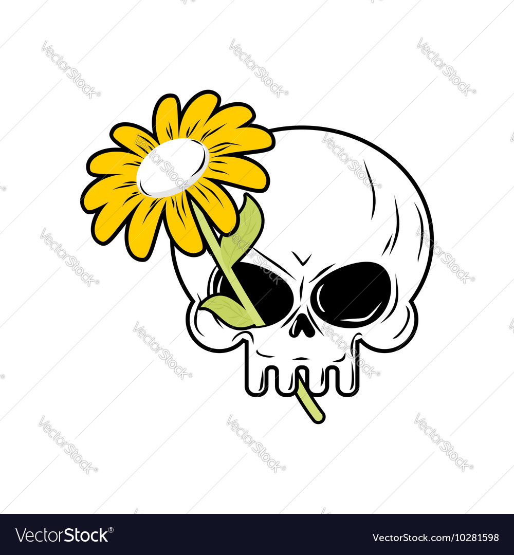 Skull and chamomile white flower and death head of skull and chamomile white flower and death head of vector image mightylinksfo