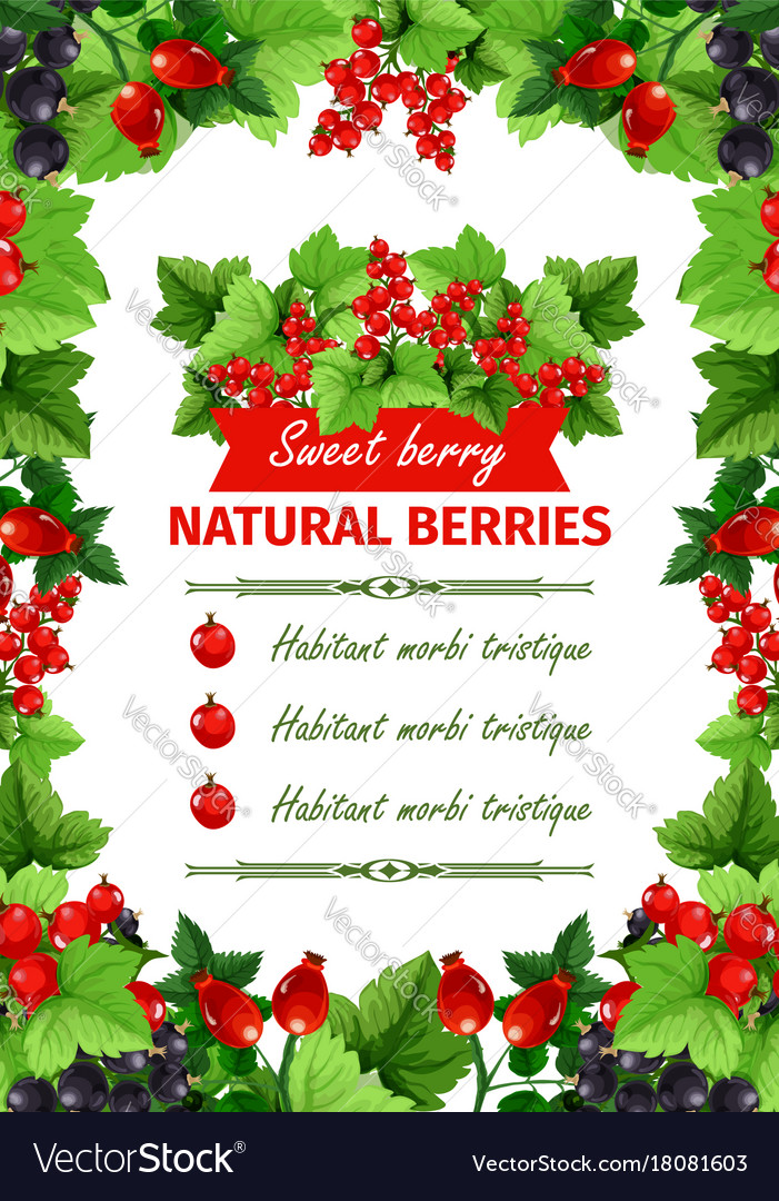 Berry sweet fruit natural food banner template