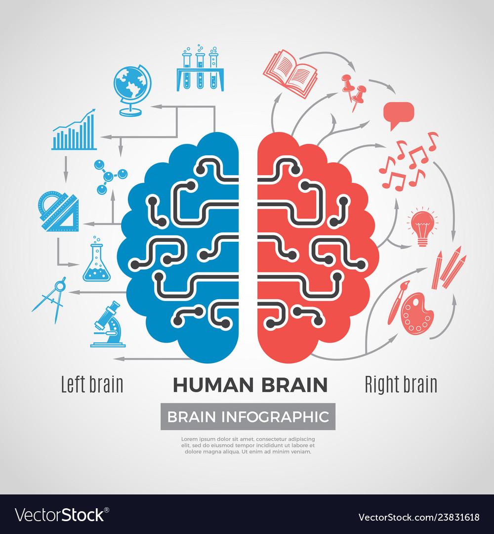 Brain silhouette infographic creative thinking