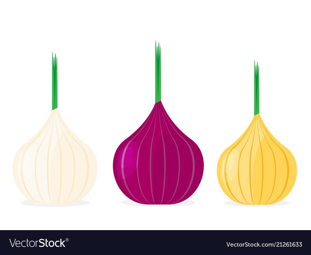 Onion flat design icon