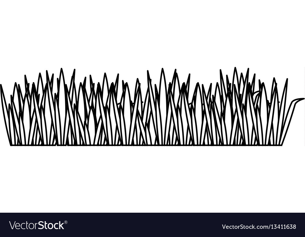 Black contour of field grass vector image