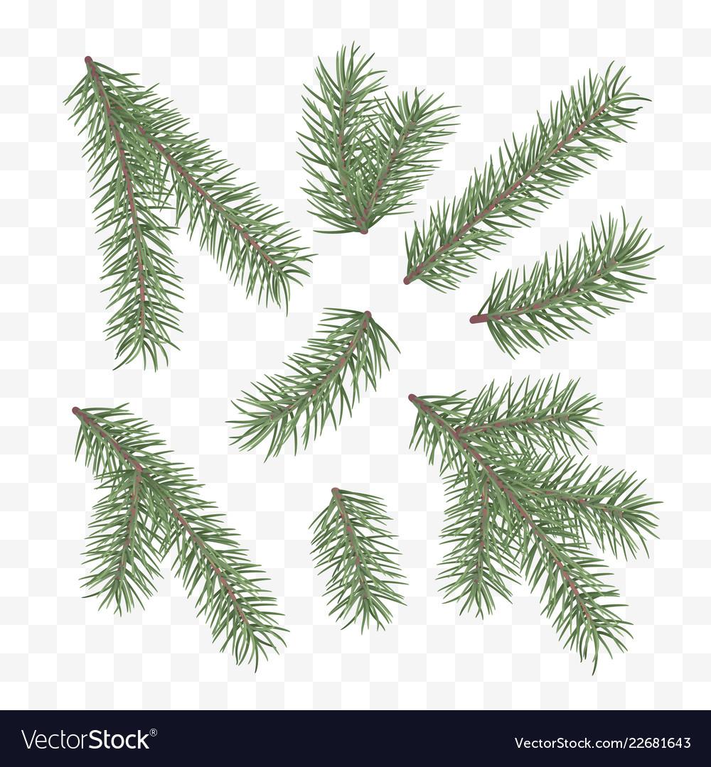 Green fir branches holiday decor element set of a