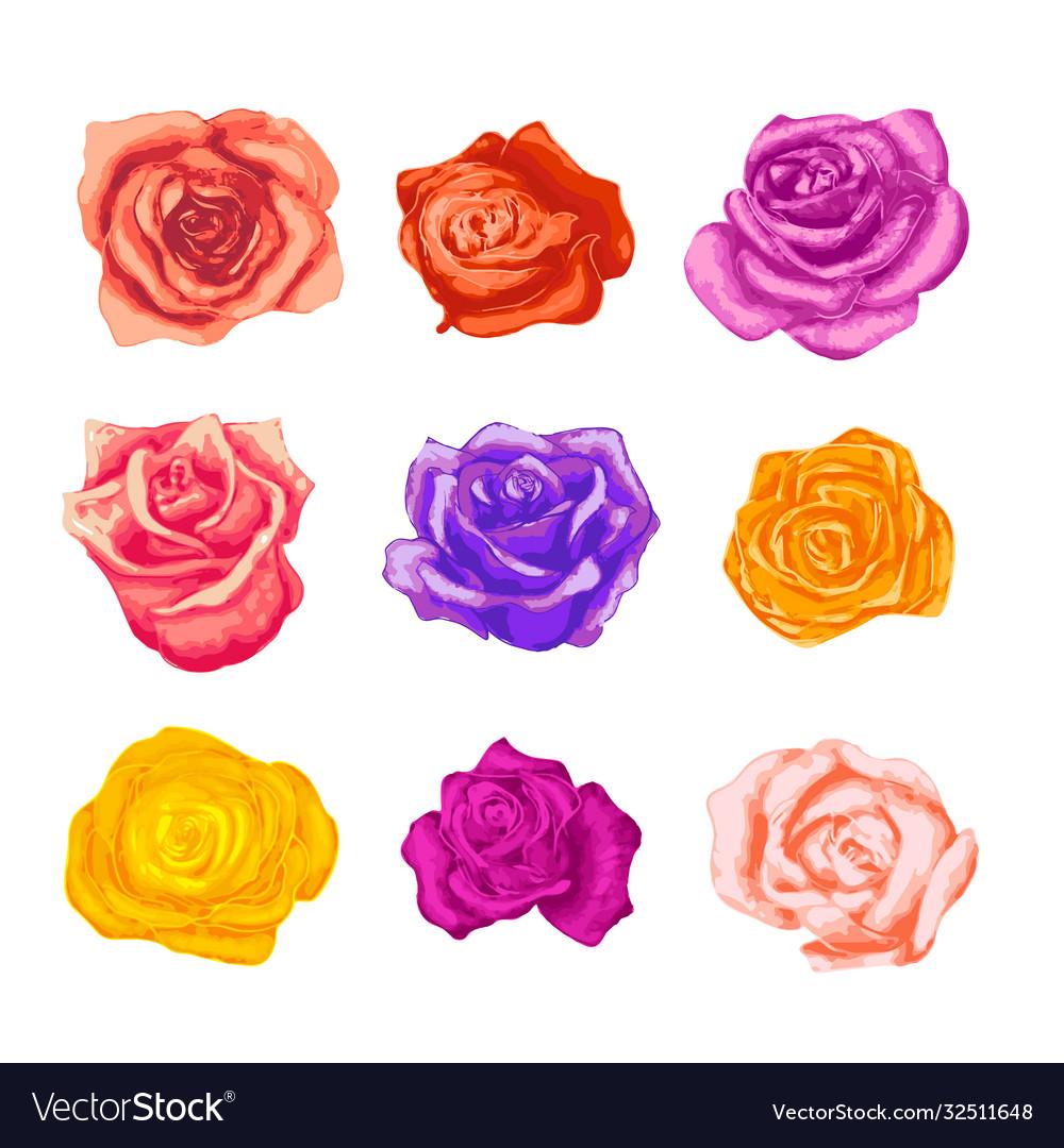 Large set bright beautiful rosebuds in