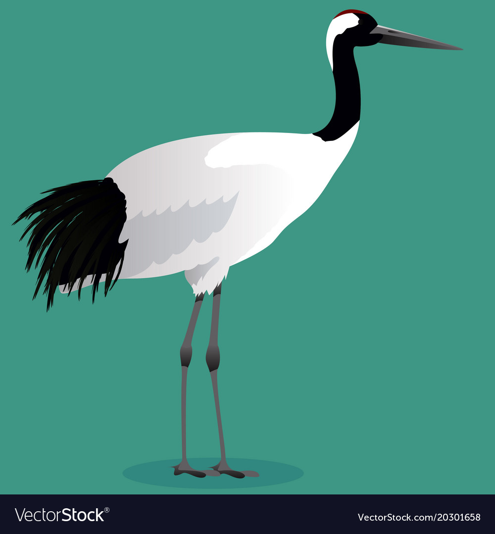 red crowned crane cartoon royalty free vector image