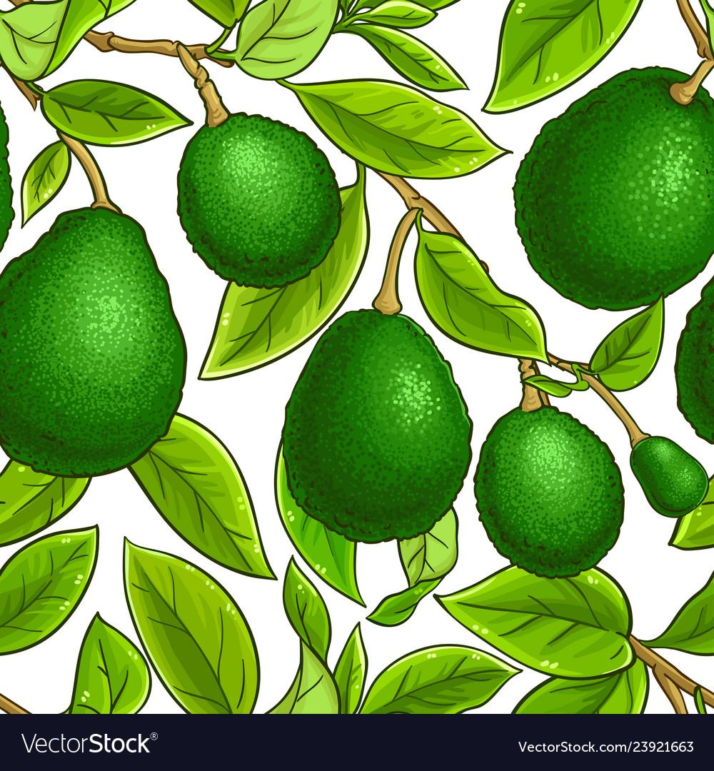 Avocado fruits pattern on white background