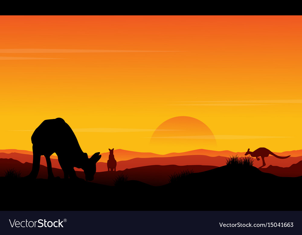 Silhouette kangaroo at sunset scenery