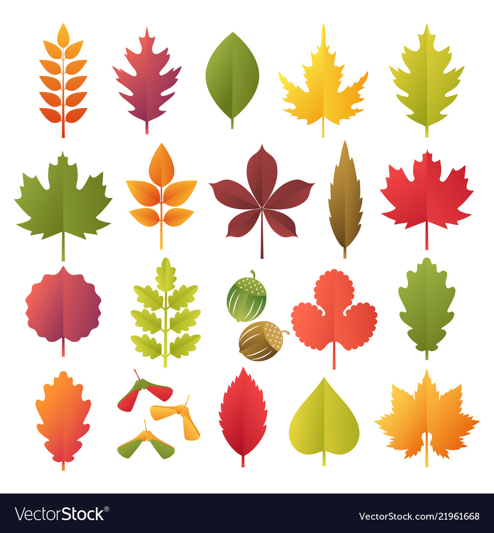 Colorful autumn leaves set isolated on white