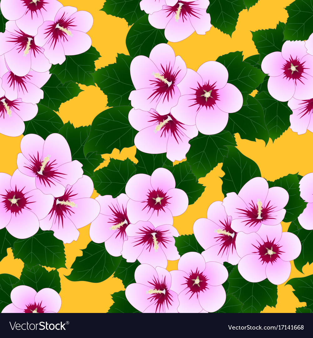 Pink Hibiscus Syriacus Rose Of Sharon On Yellow Vector Image