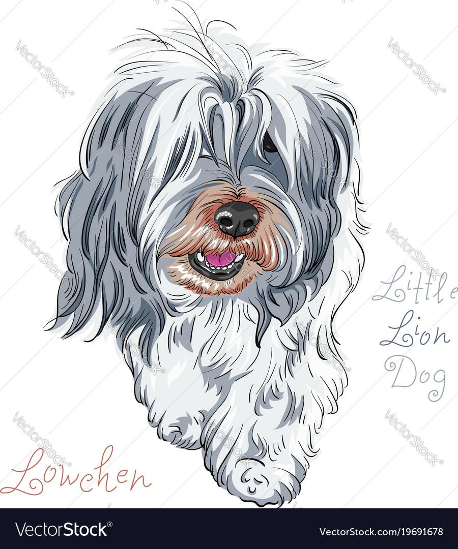 Dog breed lowchen