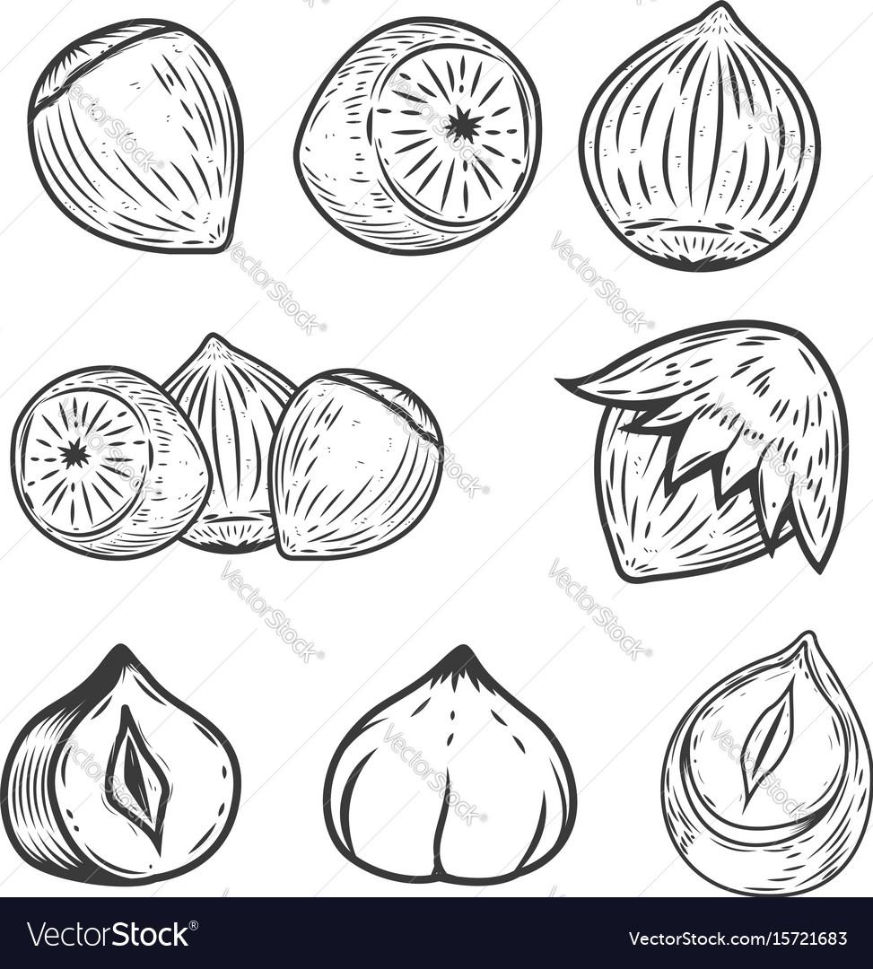 Set of hazelnuts icons isolated on white