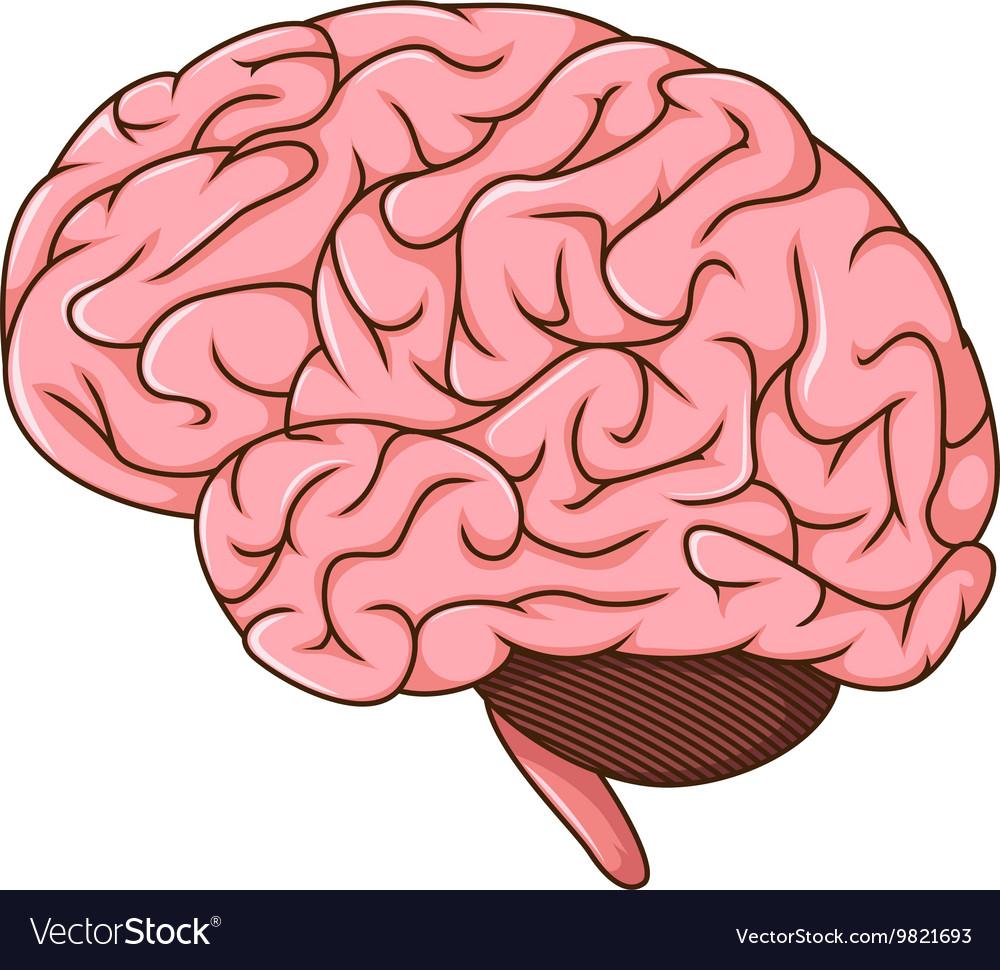 human brain cartoon royalty free vector image vectorstock rh vectorstock com heart and brain cartoon images Brain Drawing