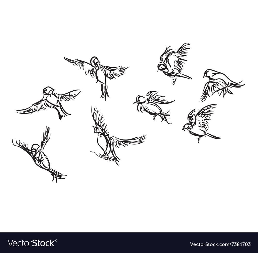 Hand-drawn bird doodles