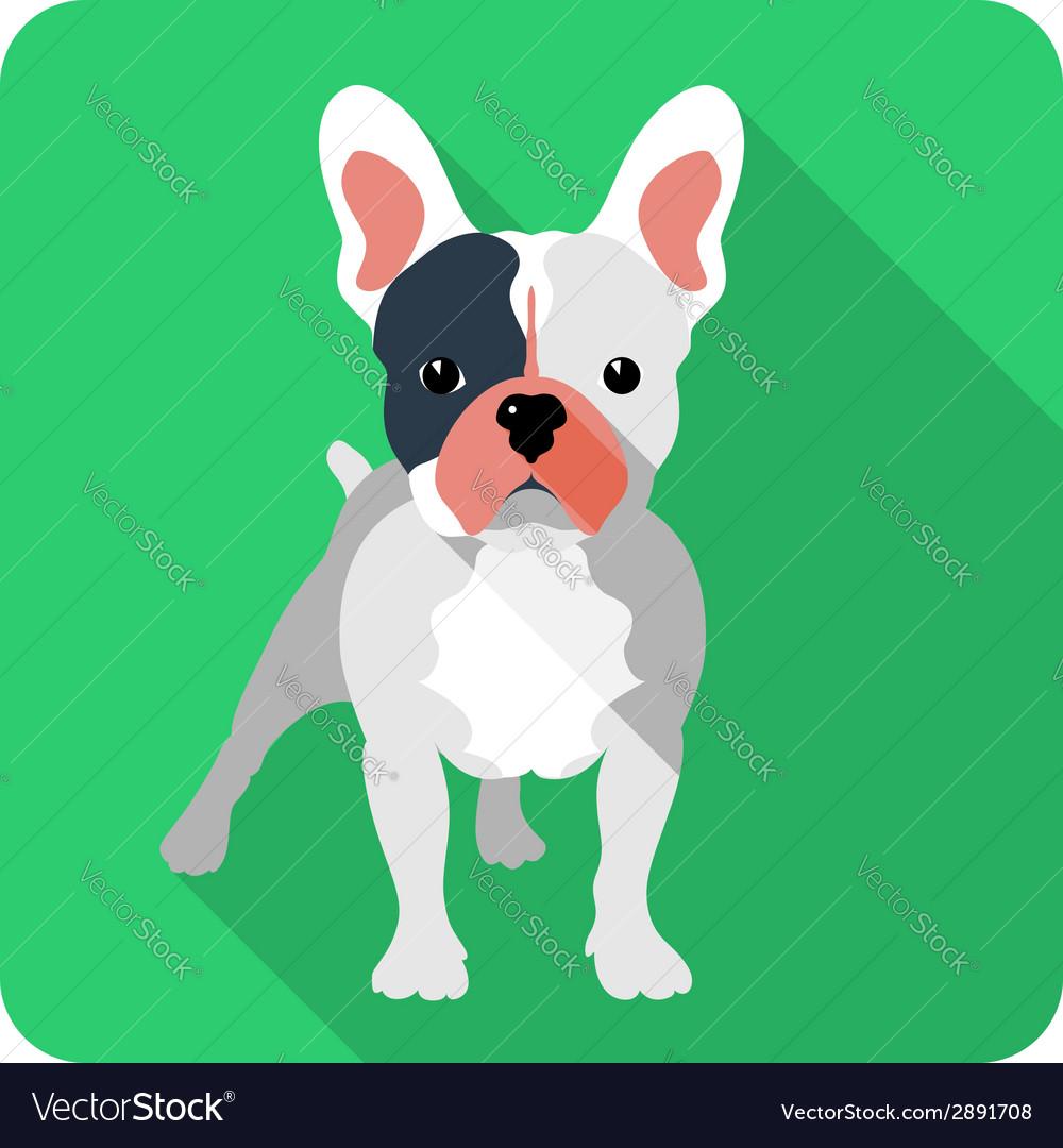Dog French bulldog icon flat design