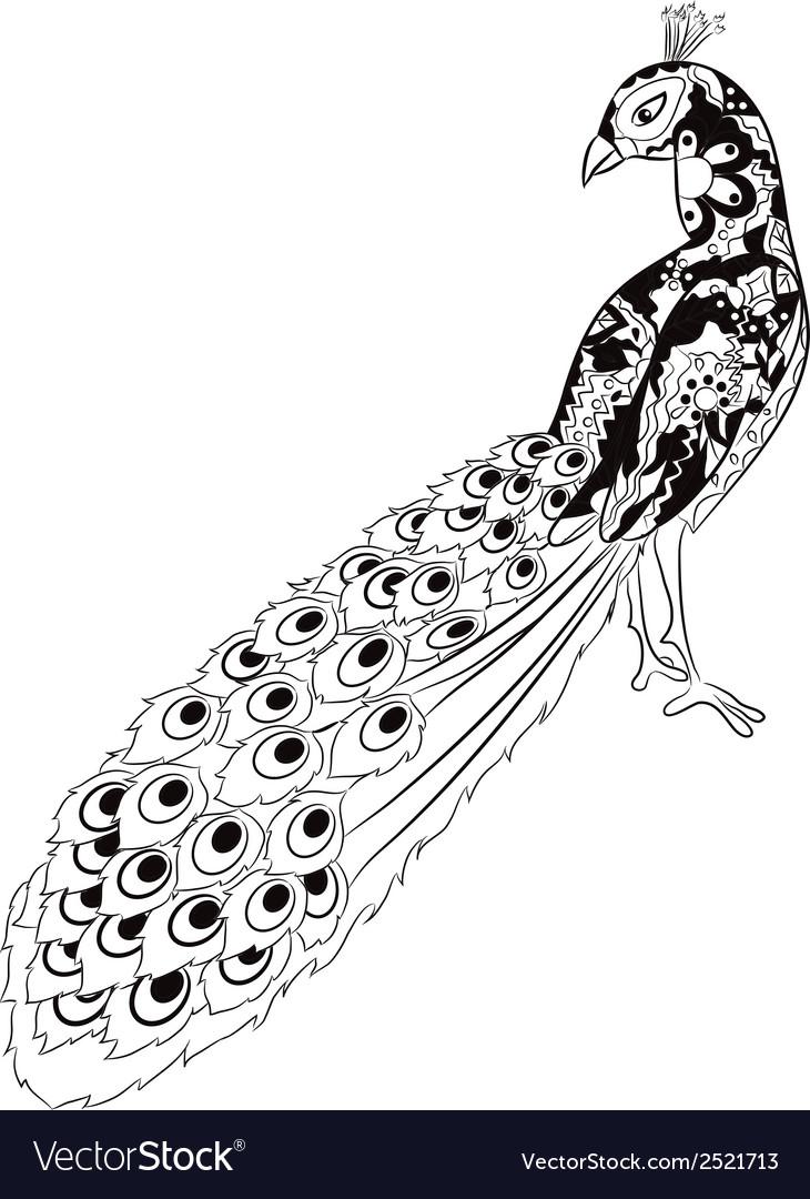 Hand drawing peacock