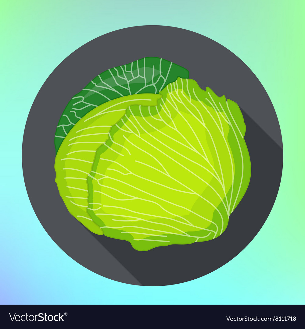 Whole cabbage flat icon