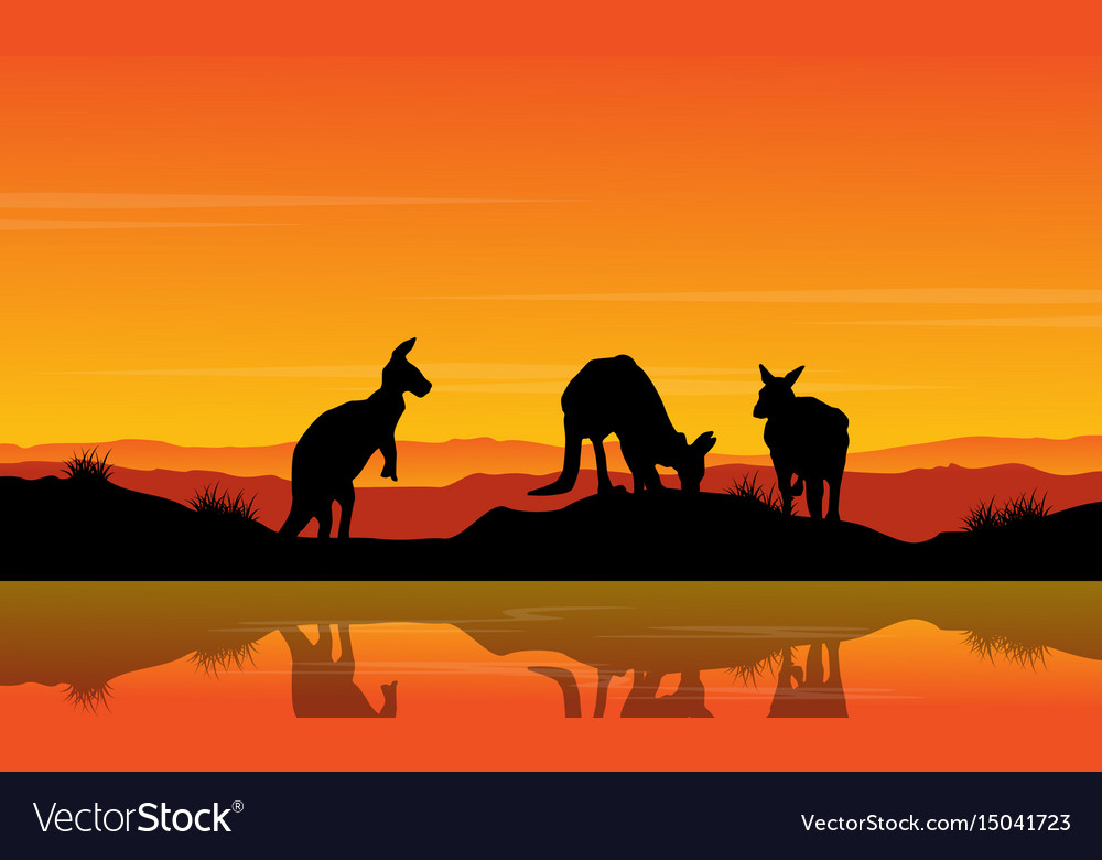 Landscape kangaroo on the river silhouette