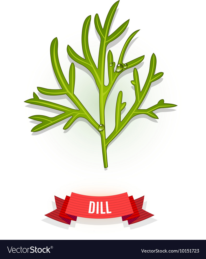 Leaves of dill
