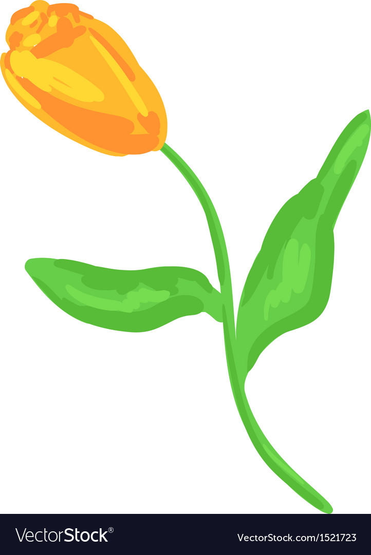 Yellow tulip sketch vector image