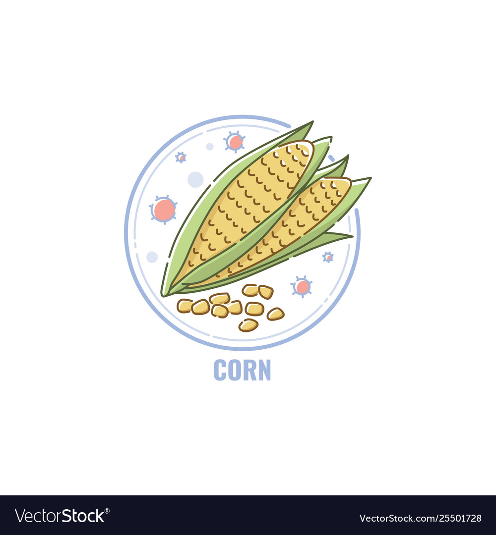 Icon corn cobs and seeds in circle flat linear