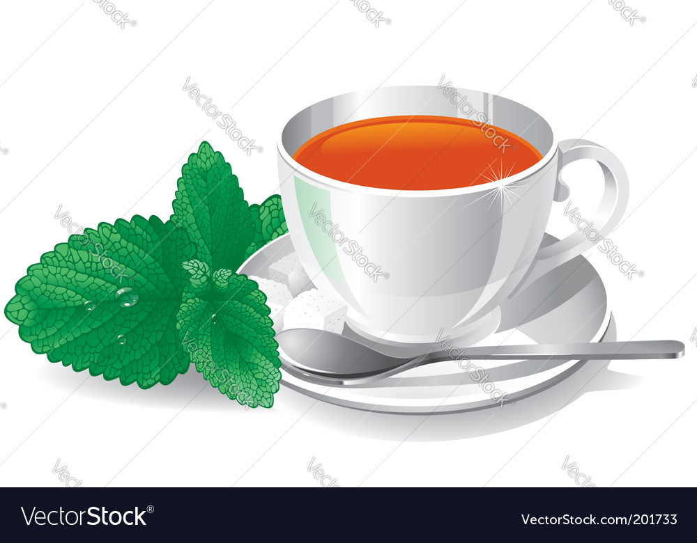 Cup of tea with mint vector image