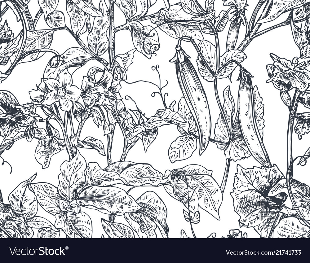 Seamless pattern with hand drawn vegetable