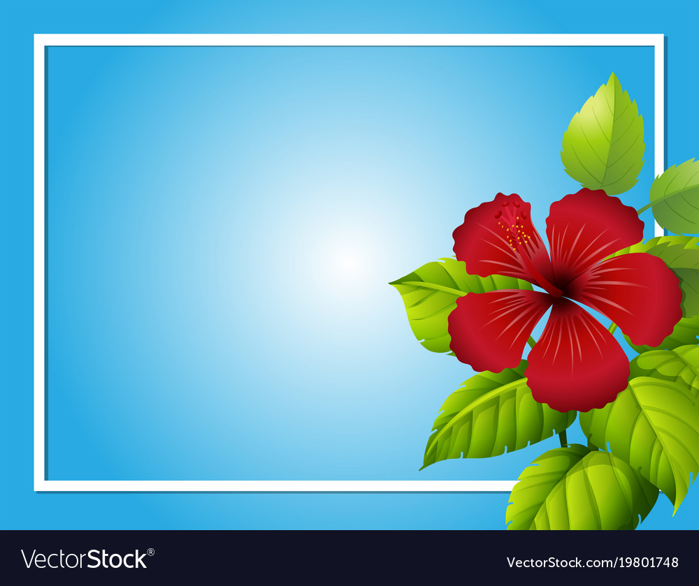 Blue Background Template With Hibiscus Flower Vector Image