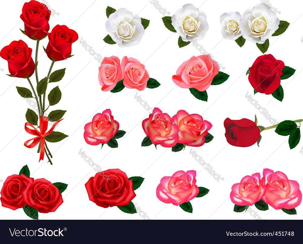 Roses graphics vector image