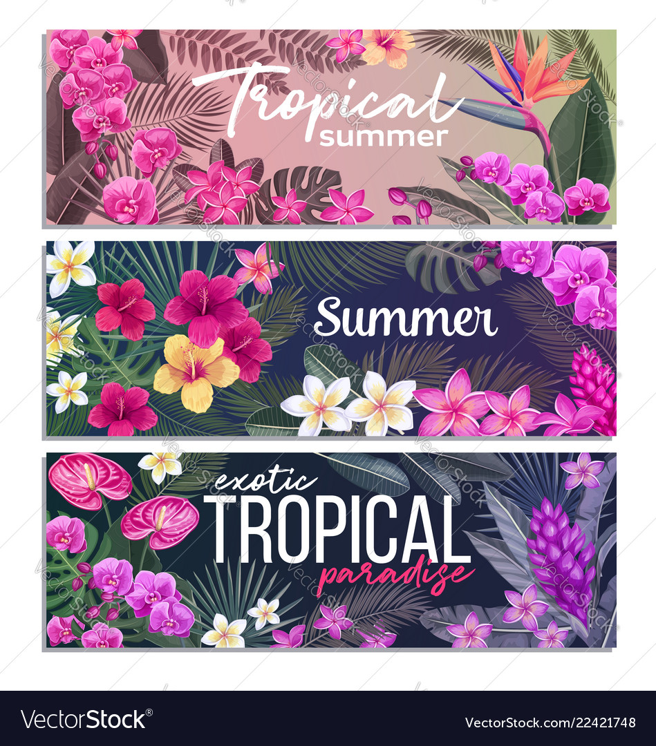 Tropical banners exotic flower and leaves