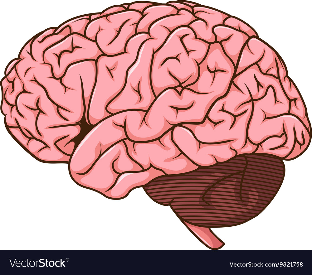 human brain cartoon royalty free vector image vectorstock
