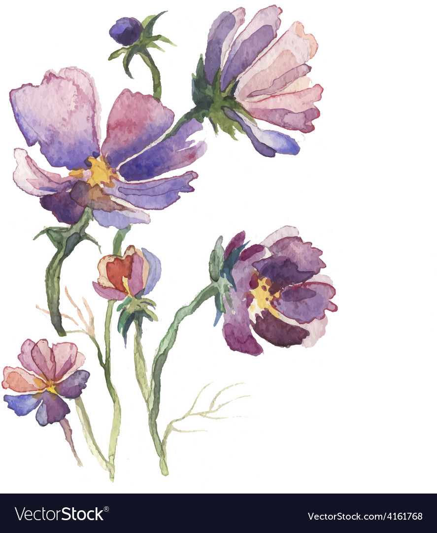 The Spring Flowers Watercolor Isolated Royalty Free Vector