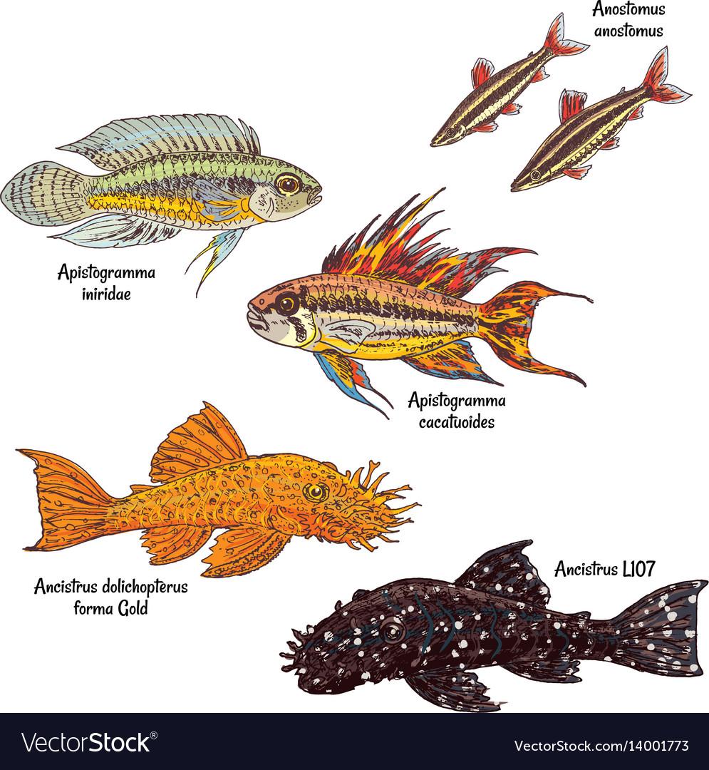 Colorful aquarium bottom fishes collection