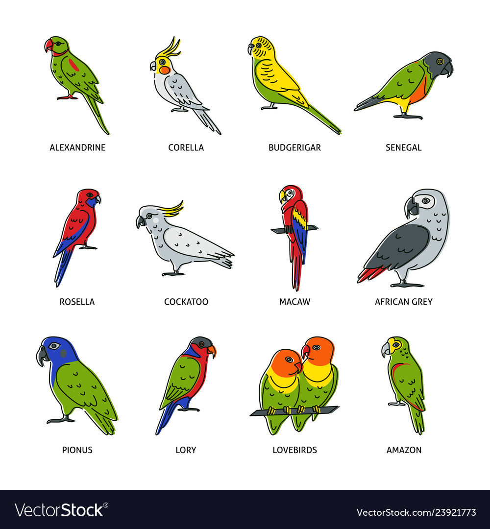 Set of parrot icons in colored line style