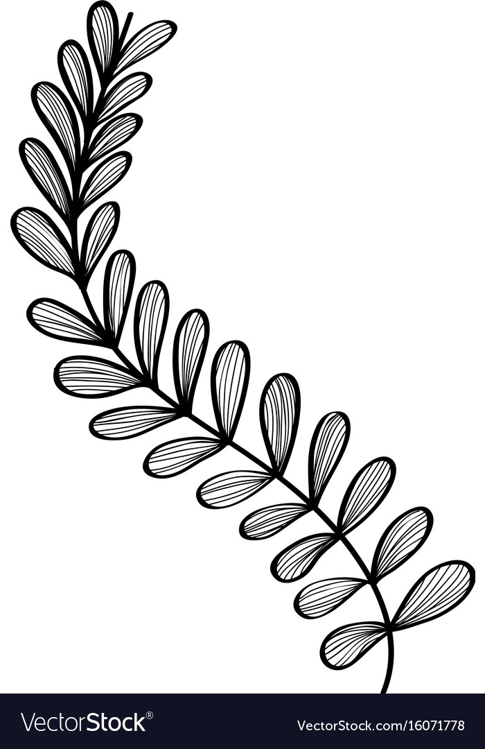 Rustic natural branches plant with leaves