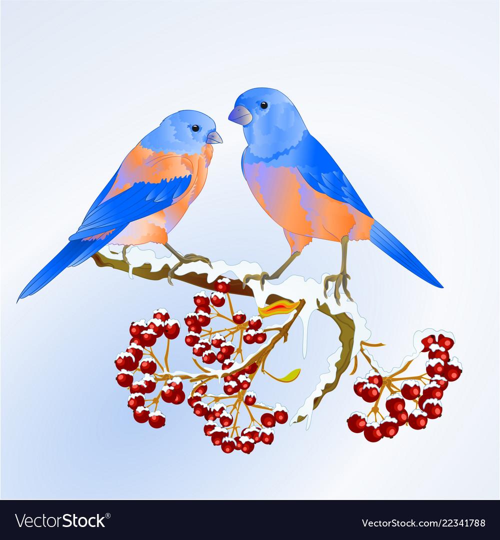 Birds bluebirds thrush small songbirdon