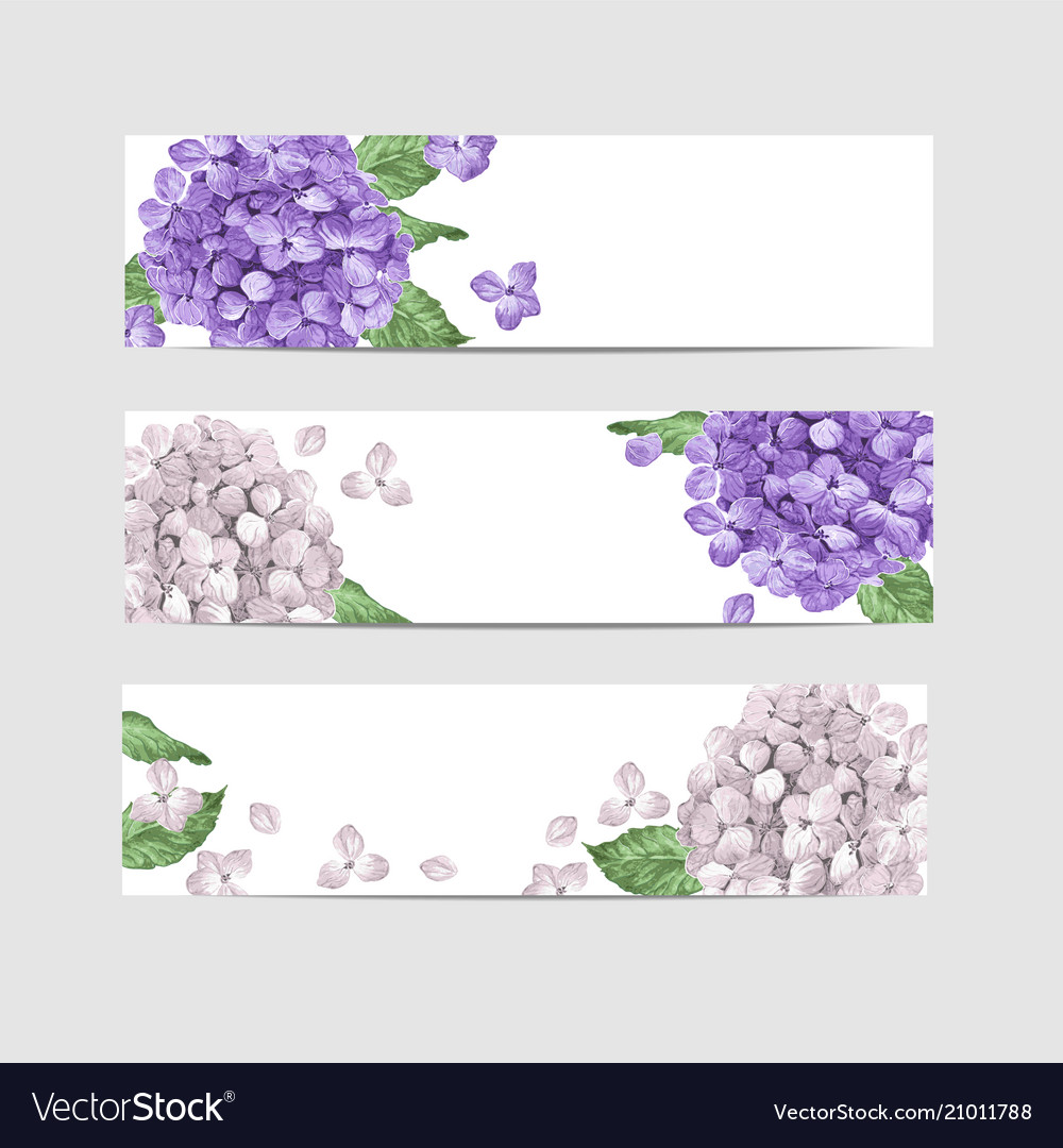 Hydrangea floral banner template in watercolor