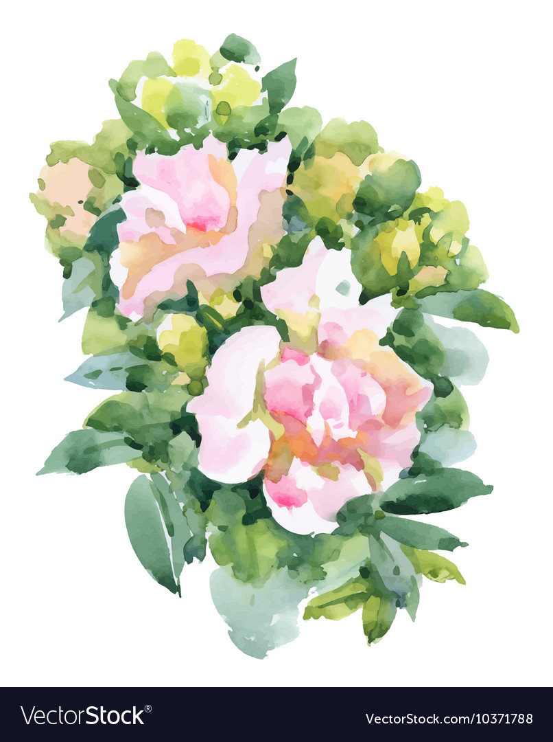 Watercolor garden roses isolated on white