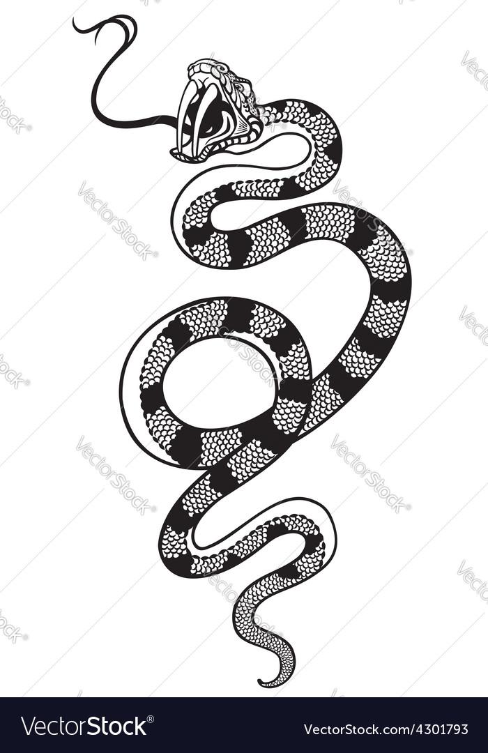 Snake tattoo black white vector image