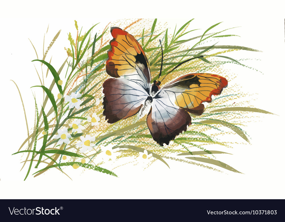 Colorful watercolor pattern with butterfly and