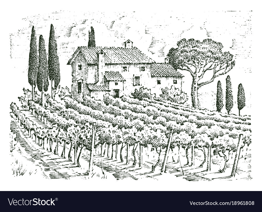 Rustic vineyard rural landscape with houses