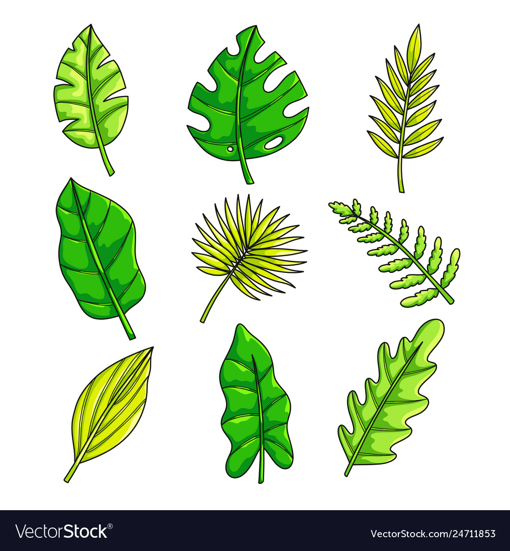 Plants set with tropical collection fresh green